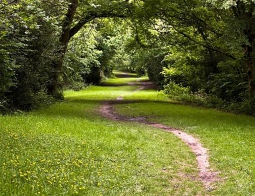 Tunbridge Wells and Rusthall Common