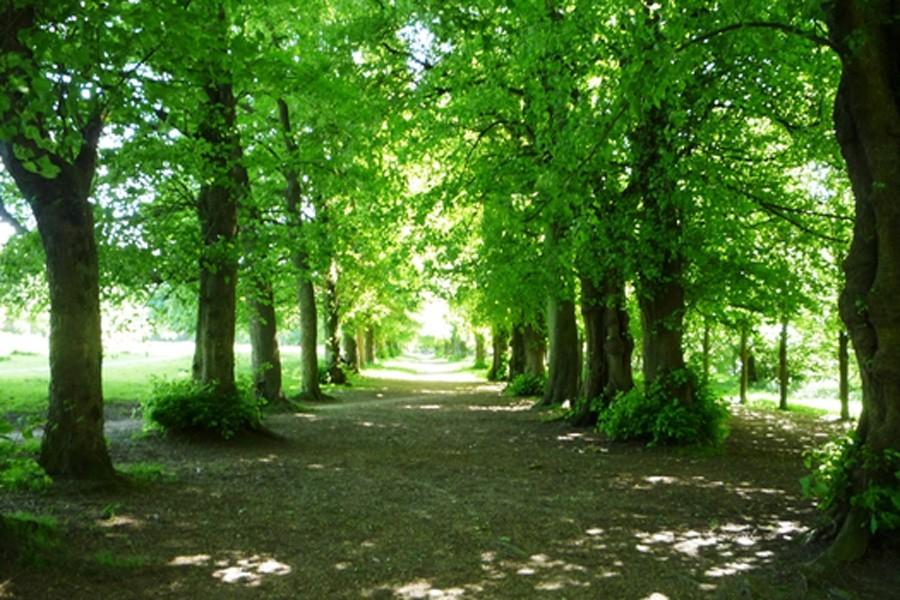royal-victoria-grove